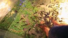 Peeling skin feet of tropical fish Stock Footage