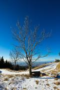 Isolated tree in a cold december morning Stock Photos