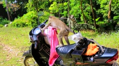 Macaque steals tourist's package from motorbike. - stock footage