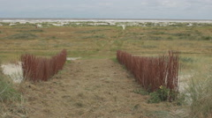Willows at sea entrance Stock Footage