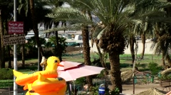 Western Asia Red Sea Jordan Aqaba 009 palm tree garden at the promenade Stock Footage