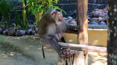 Monkey at monkey school. Stock Footage