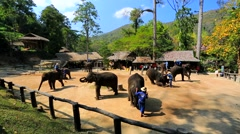Elephant show Stock Footage