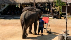 Elephant artist painting Stock Footage