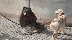 Dog looks at Homeless fox sculpture in central Stockholm, Sweden Stock Footage