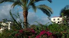 Western Asia Red Sea Jordan Aqaba 041 exotic plants in a hotel garden Stock Footage