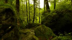 walking trough green forest trees - green energy nature background. - stock footage