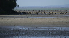 New Zealand beach at low tide in spring. - stock footage