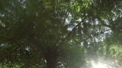 Ponga Tree (Fern) in a New Zealand Forest with sun streaming through the canopy. Stock Footage