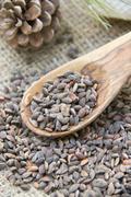 Aleppo pine seeds Stock Photos