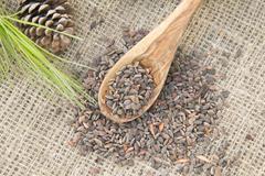 Stock Photo of aleppo pine seeds