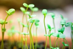 Small green seedling Stock Photos
