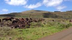 Horse around Ahu Tongariki at the Easter Island, Rapa Nui Stock Footage