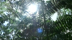 Green leaves in springtime forest and sunlight. Stock Footage