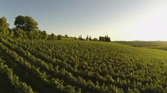 Aerial view of an italian vineyard Stock Footage