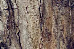 Old wallnut tree trunk texture Stock Photos