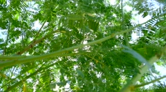 Green leaves in springtime forest and sunlight Stock Footage