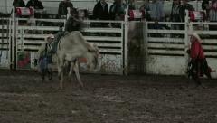 Bull ride night rodeo cowboy HD 313 Stock Footage