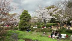 People tourists cherry blossom Maruyama-koen Park Kyoto Japan Asia Stock Footage