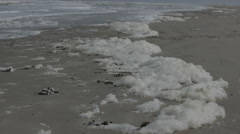 Seafoam at the beach on a windy day Stock Footage