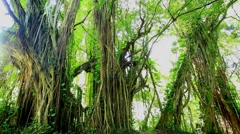 Amazonian rainforest, Brazil Stock Footage