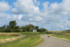 Cat on road on texel. Stock Photos