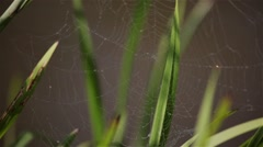 Web on leaves about the river in the morning Stock Footage
