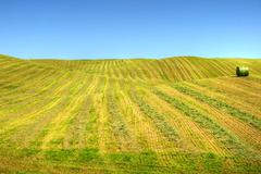 Gentle hills of swathed field Stock Photos