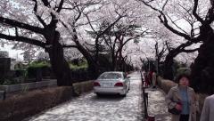 Aoyama cemetery graveyard cherry blossom streets Tokyo Japan Asia Stock Footage
