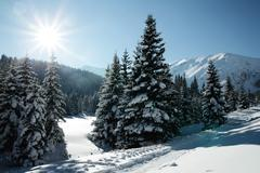 Snowy view in tatra mountains, winter landscapes series Stock Photos