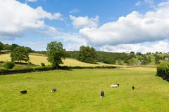 Near Sawrey village by Hawkshead Lake District home to Beatrix Potter - stock photo