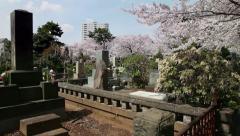 Aoyama cemetery graveyard cherry blossom trees Tokyo Japan Asia Stock Footage
