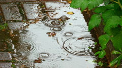 Falling raindrops into puddle - stock footage
