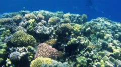 Sunny coral reef in the red sea Stock Footage