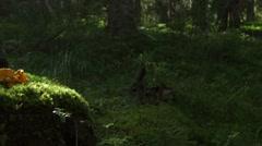Beam of sunlight illuminates the forest moss and orange mushrooms Stock Footage