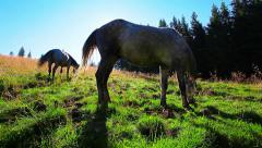 Horses grazing on the background of the morning sun Stock Footage