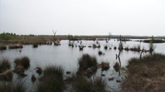 Pan peat lake with bog wood remains and living peat area with birch Stock Footage