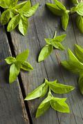 Fresh green organic basil Stock Photos
