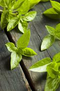 fresh green organic basil - stock photo