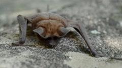 Bat sleeping on the rock Stock Footage