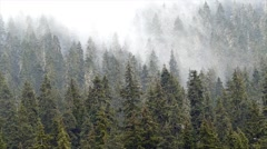 Forest trees with dense fog. Stock Footage