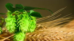 Hops and barley,zoom out Stock Footage
