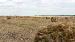 Straw bales in summer Stock Footage