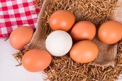 organic eggs in nest - stock photo