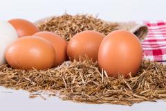 Stock Photo of organic eggs in nest