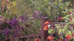 Beautiful yellow flower Stock Footage