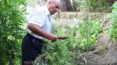 Farmer harvesting fresh carrots, organic vegetable garden, gardening, crop Stock Footage