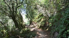 Forest Path near Muir Woods National Monument Stock Footage