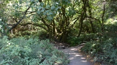 Muir Woods National Monument Stock Footage