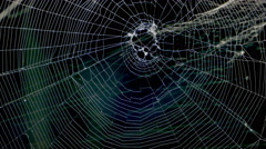 Spider Slides up into a Spider Web - 4K Stock Footage